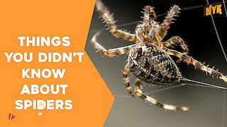 Top 4 Facts About Spiders
