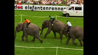 Elephant Race - Video