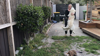 Emotional reunion between dog and owners after weeks apart - Video