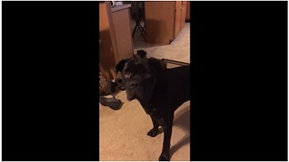 Guilty dog is sorry for his mistake - Video
