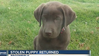 Stolen puppy, truck both returned to owner after media attention - Video