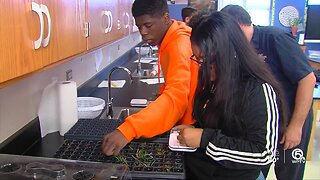 Tradewinds Middle School students growing endangered orchids
