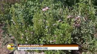 Melinda's Garden Moment - Growing and using less common herbs