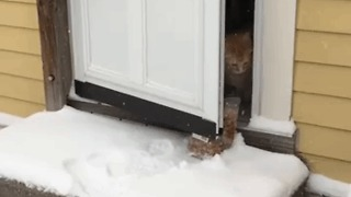 Hobbes the Ginger Cat Explores the Snow - Video