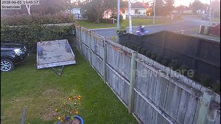 Moment out-of-control scooter rider screams as she plows into garden hedge - Video