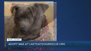 Meet Mak: Our Pet of the Week