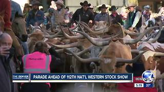 Herd of Longhorn cattle invades downtown Denver during National Western Stock Show Parade - Video