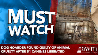 Dog hoarder found GUILTY of animal cruelty after 51 canines liberated - Video