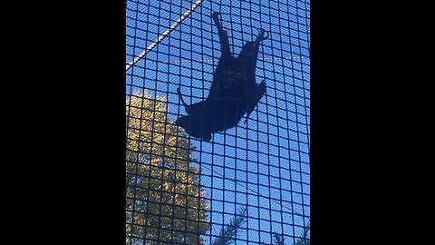 Amazing Huge Bat comes over to see us!