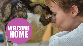 17yo moggy finally home after 13 years as a stray - Video