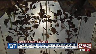Couple raises, sells butterflies in Green Country - Video