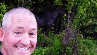 Cyclist stops for selfie with bull moose - Video