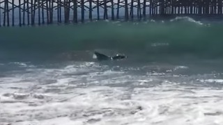 Young Whale Spotted Near Newport Beach Shore