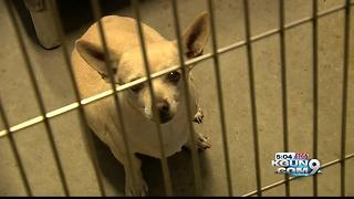 Fireworks exploding pet population at PACC - Video
