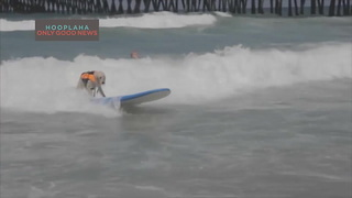 Amazing Dogs Surf for Charity - Video