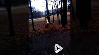 Dog goes for a swing - Video
