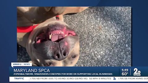Zoe the dog is up for adoption at the Maryland SPCA