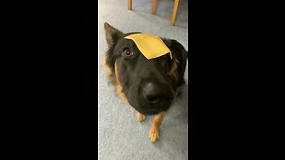 Cheese Slice Sends Pup Into Hilarious Freeze State - Video