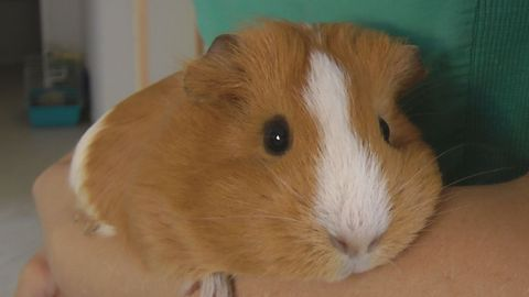 Guinea Pig Without ASR /Anti-slip regulation/
