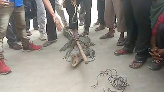 Villagers catch crocodile, take it to police for complaint for attacking one of them - Video