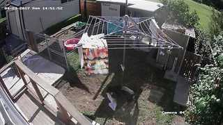 CCTV Catches Naughty Dog Snatching Clothes From Washing Line - Video