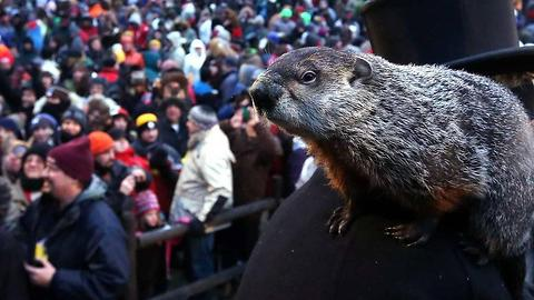 Did the Groundhog See His Shadow Today?