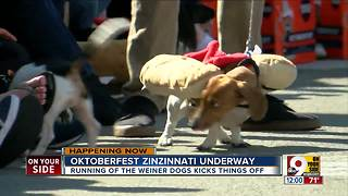 Oktoberfest Zinzinnati underway - Video