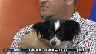Pet of the week: Mimi - Video