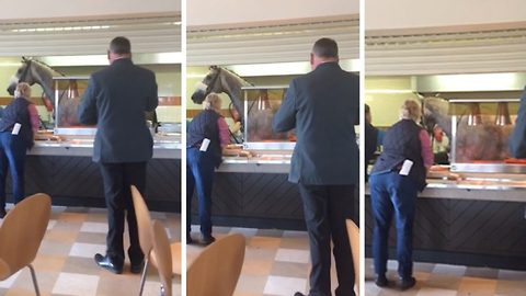 There won't be much food furlong! Horse escapes racetrack and ends up in canteen