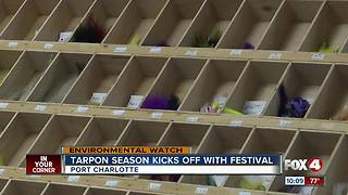 Tarpon Season Kicks Off With Festival - Video