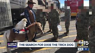 Trick dog named Dixie missing in Phoenix - Video