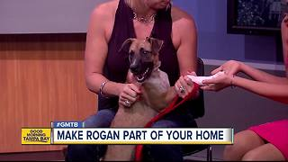 Aug. 26 Rescues in Action: Rogan seeks lifelong friend - Video
