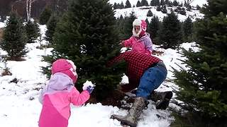 Tot Girl Gets Hit By A Falling Christmas Tree - Video