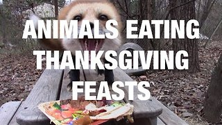 Animals Eating Thanksgiving Feasts - Video