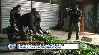 Detroit police bust two major marijuana grow operations