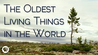 S2 Ep23: The Oldest Living Things In The World - Video