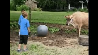 Kids Ignore Their Chores to Play Ball With Rescue Cow