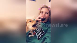 Puppy tries to steal owner's wine - Video