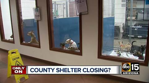 Maricopa County considering closing one of it's animal shelters