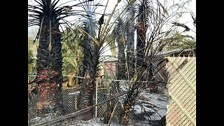 Palm tree fire in Las Vegas spreads to apartment building