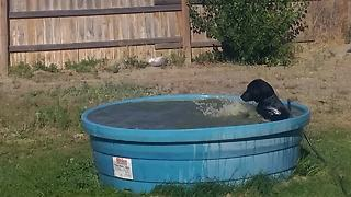 Playful Pooch Enjoys A Sunny Day In Owner's Pool - Video