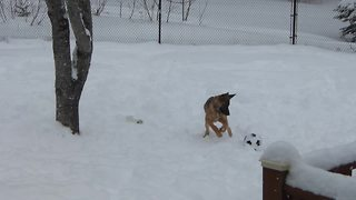 Puppy's first soccer ball results in epic playtime