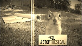 Stop The Steal Chipmunks