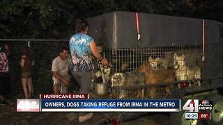 Animal shelter helps Florida family, dogs - Video