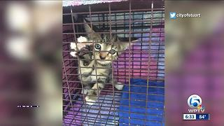 Stuart police rescue kitten trapped on Roosevelt Bridge - Video
