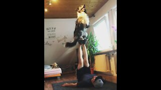 Incredibly talented doggy pulls of amazing balance trick