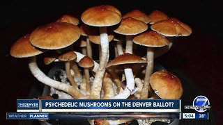 Psychedlic mushrooms could be on Denver ballot in May
