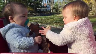 """Twin Babies Fighting Over Pacifier & Toy Monkey"""