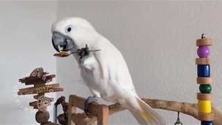 Cute Birds Get Excited for Treat Time - Video