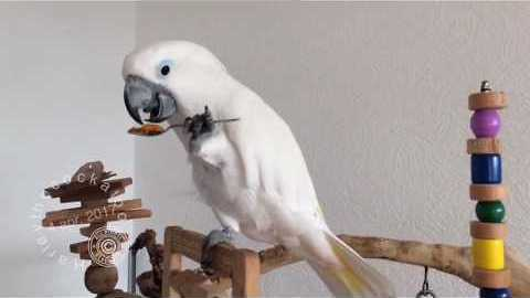 Cute Birds Get Excited for Treat Time
